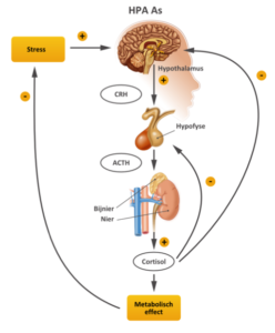 neurofeedback bij stress, overspannen of burnout